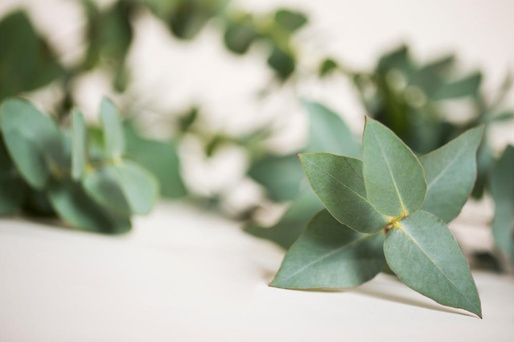 boob_eucalyptus.jpg